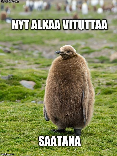 angsti_pingviini.jpg
