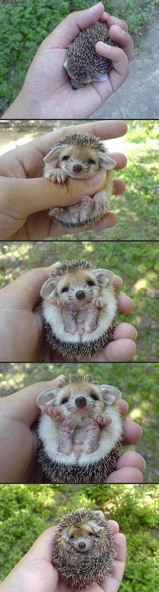 baby_hedgehog.jpg