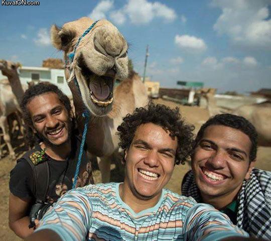 best_camel_selfie_ever.jpg