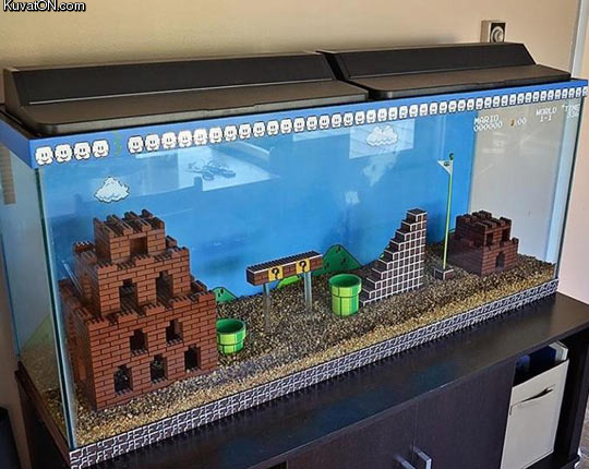 best_fish_tank_ever.jpg
