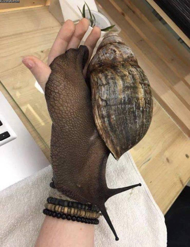 big_snail.jpg