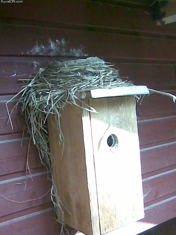 bird_doing_it_wrong.jpg