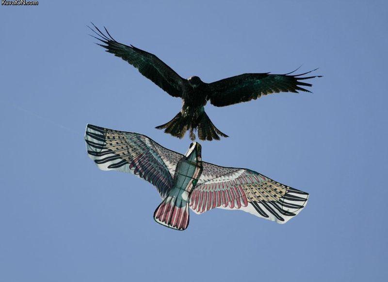 birds9.jpg