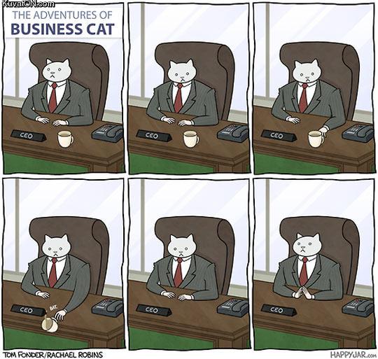 business_cat_at_work.jpg