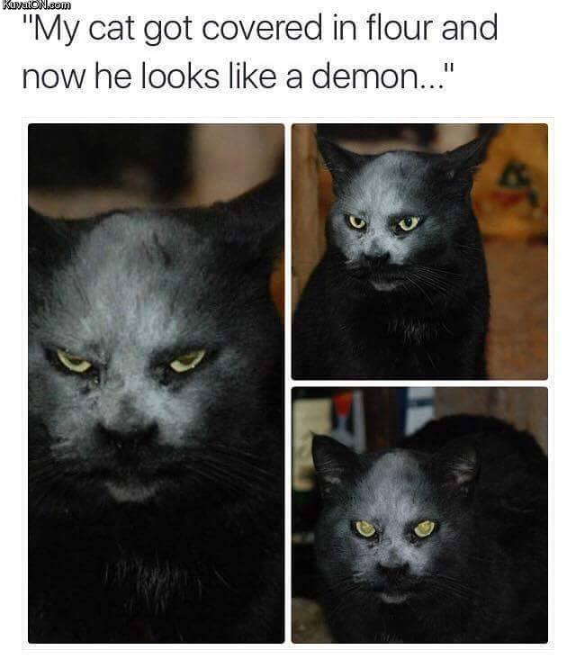 cat111.jpg