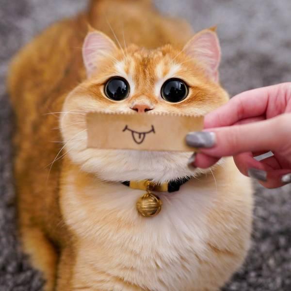 cat938.jpg
