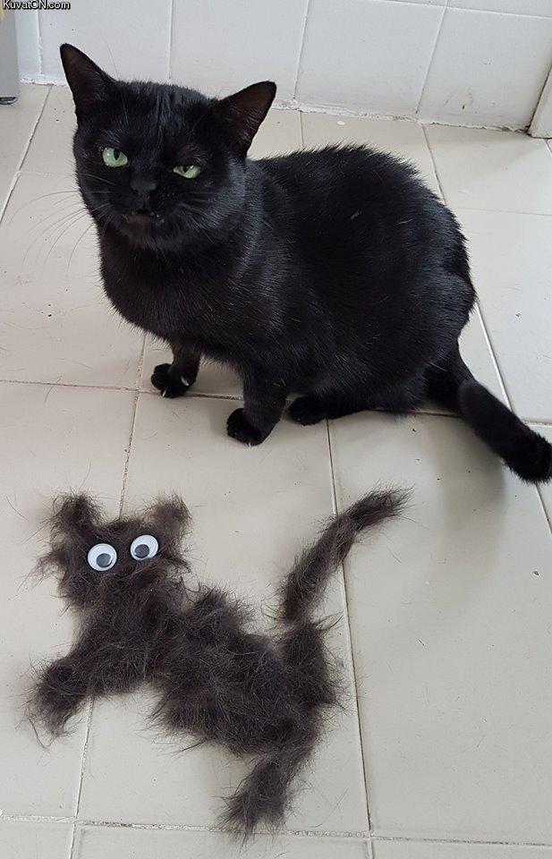 cat_insult.jpg