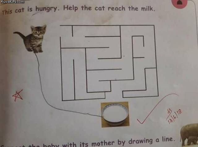 cat_is_hungry.jpg