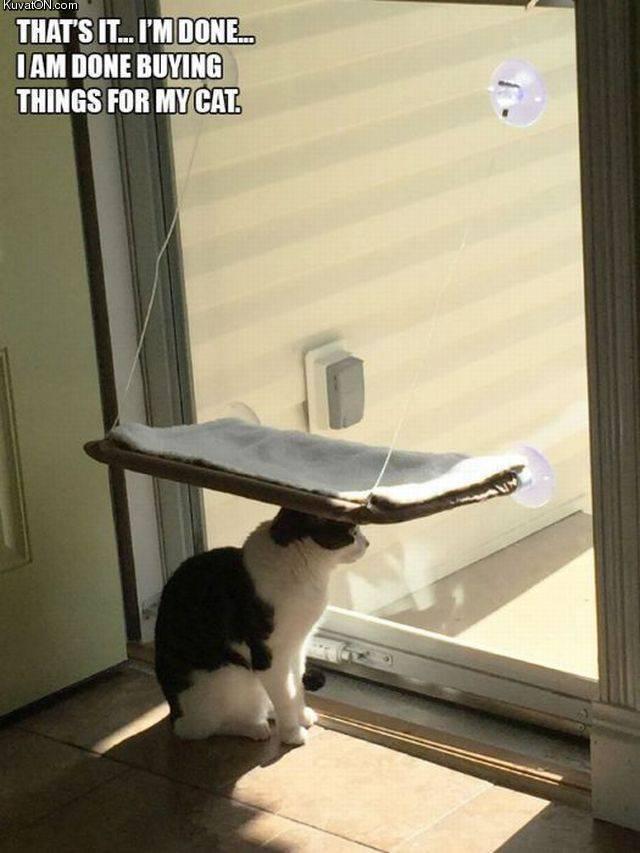cats_4.jpg