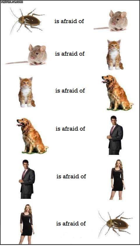 circle_of_fear.jpg