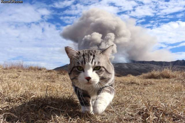 cool_cats_dont_look_at_explosions.jpg