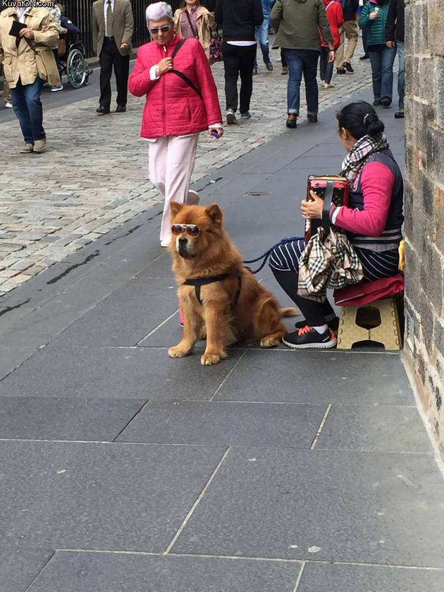cool_doge_.jpg