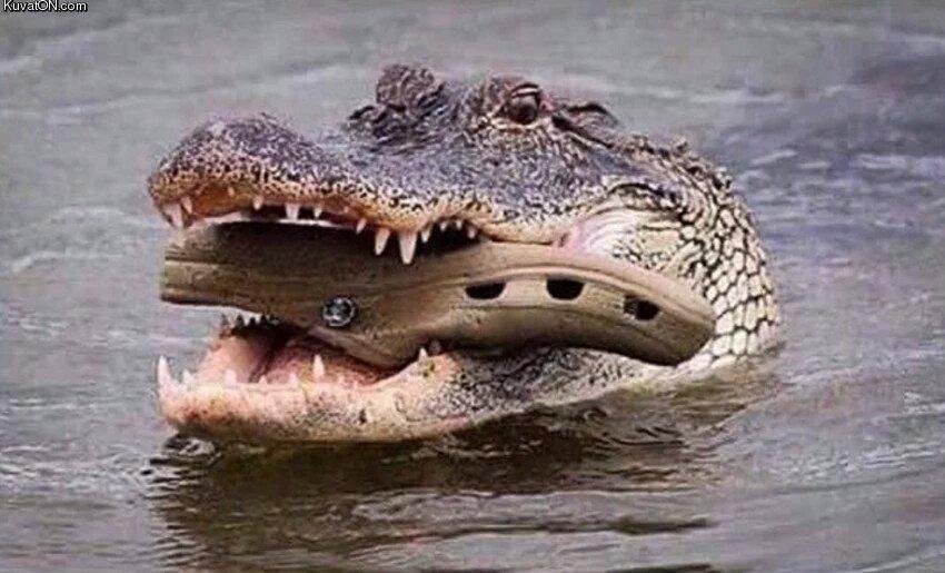 croc_croc.jpg