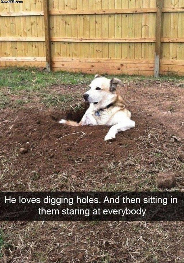 diggingholes.jpg