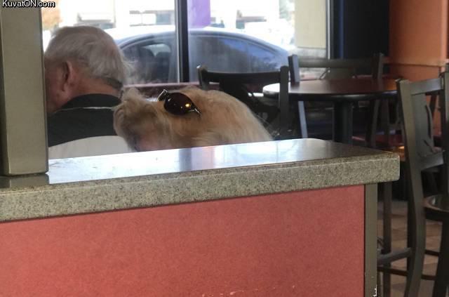 dog_wait_what.jpg