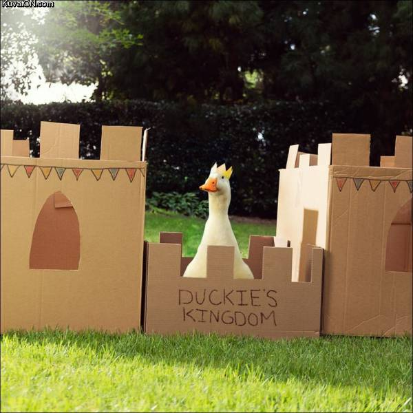 duckies_kingdom.jpg