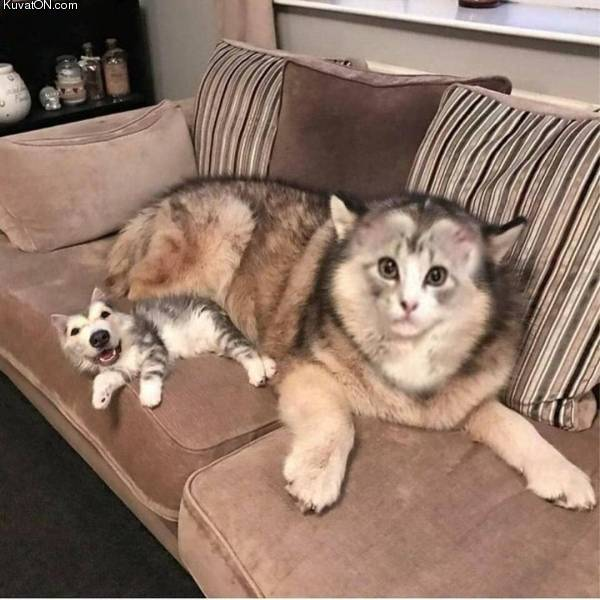 faceswap_dogcat.jpg
