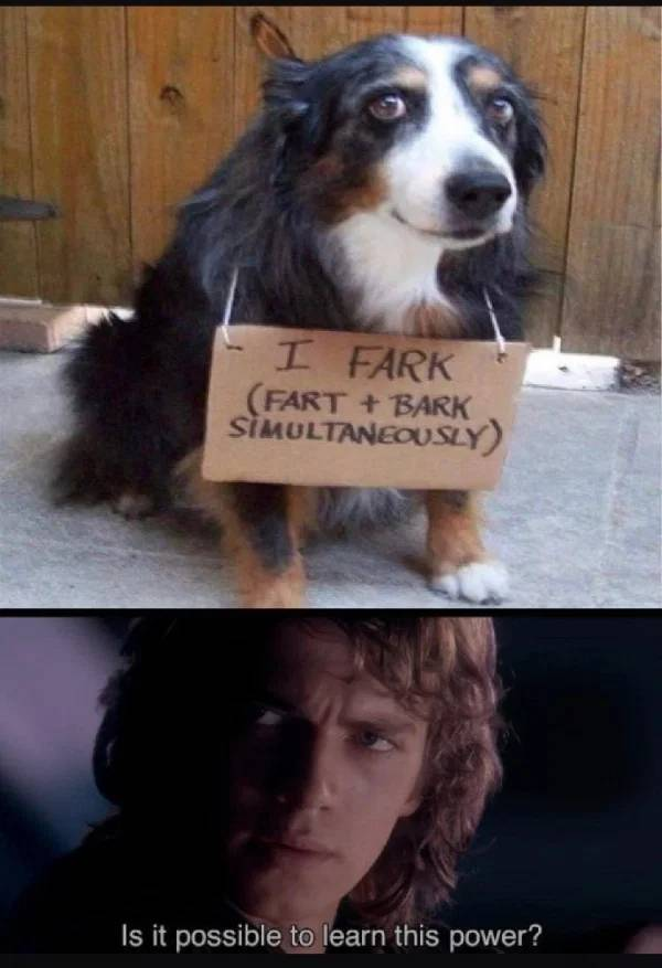 farkdog.jpg
