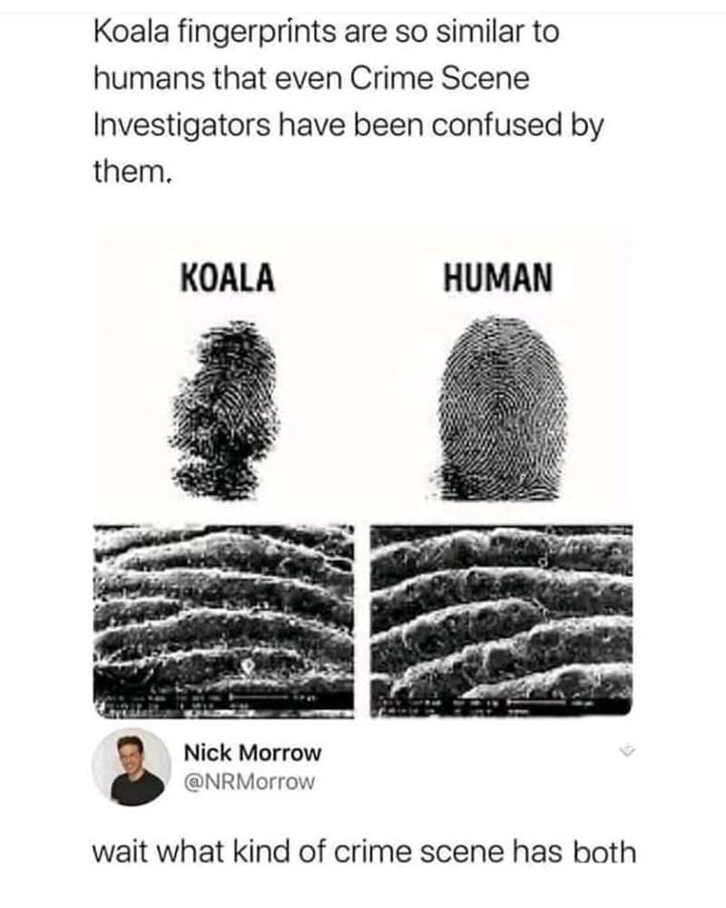 fingerprints3.jpg