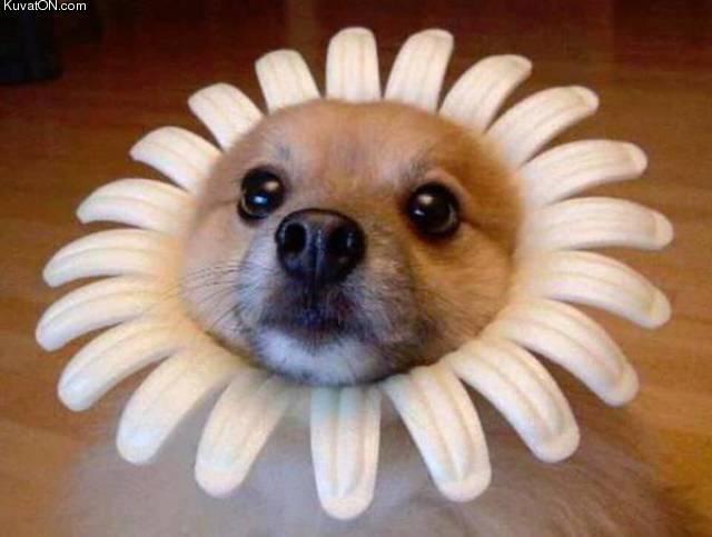 flowerdoge.jpg