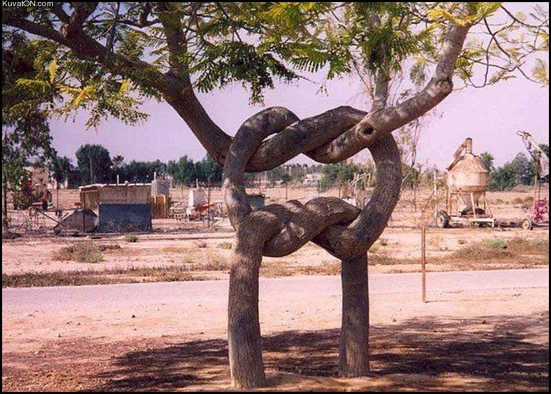 Arbres hors du commun Funny_tree