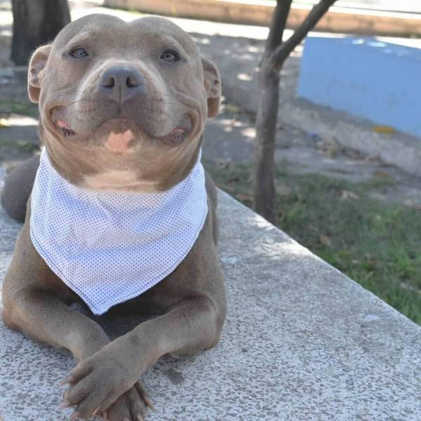 happydogsmile.jpg