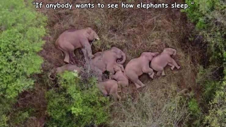 how_elephants_sleep.jpg