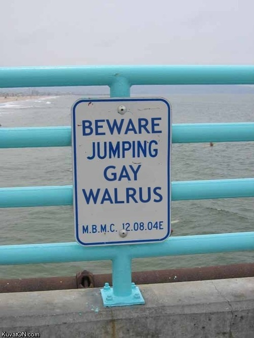 jumping_gay_walrus.jpg
