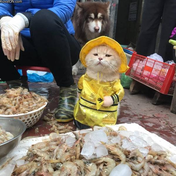 kalakauppiaan_kisse.jpg