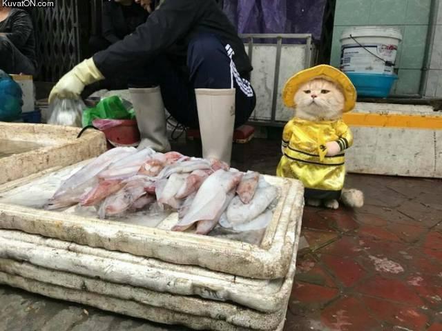 kalastajakisse.jpg