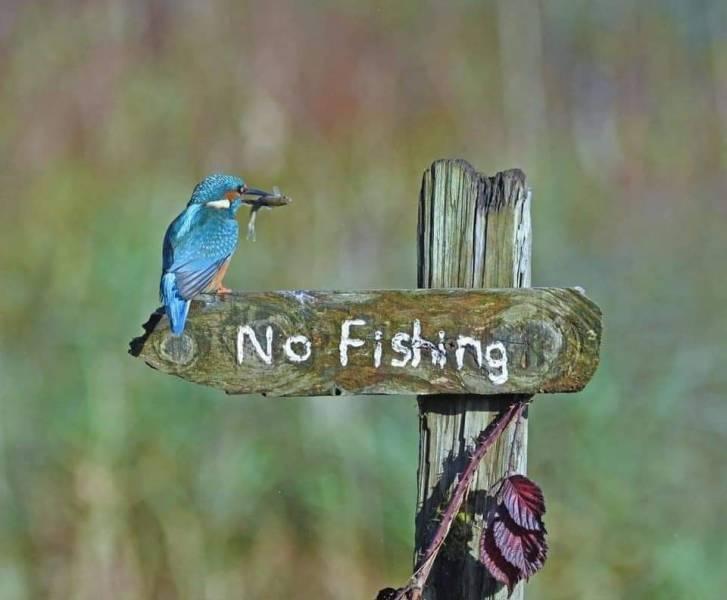 kalastuskielto.jpg