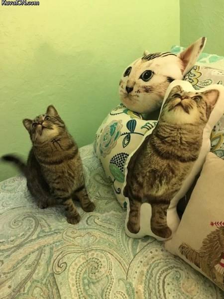 kissatyyny5.jpg