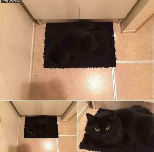 kisse_maastoutuu_taydellisesti.jpg
