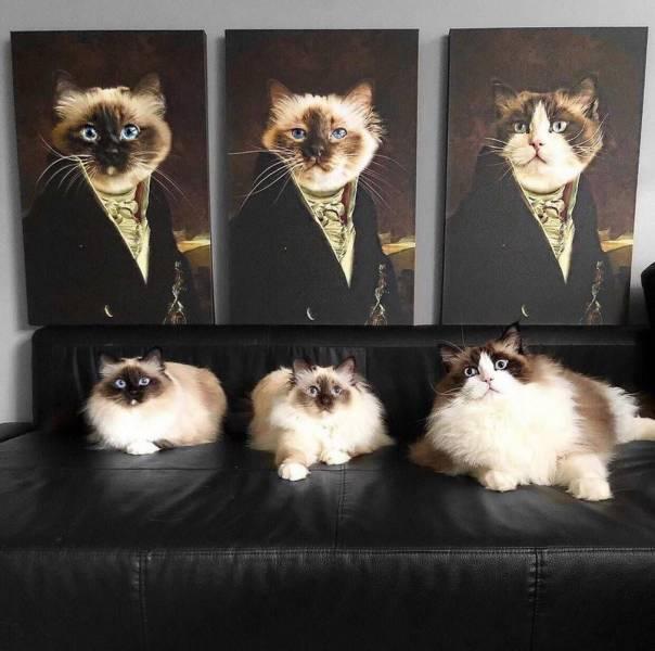 kissetaulut.jpg