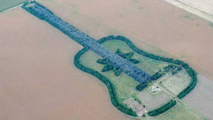 kitaraa_pellossa.jpg