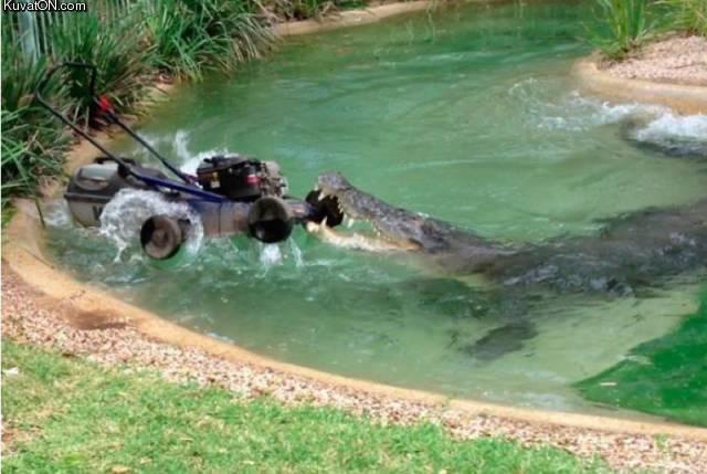 krokotiili_vs_leikkuri.jpg