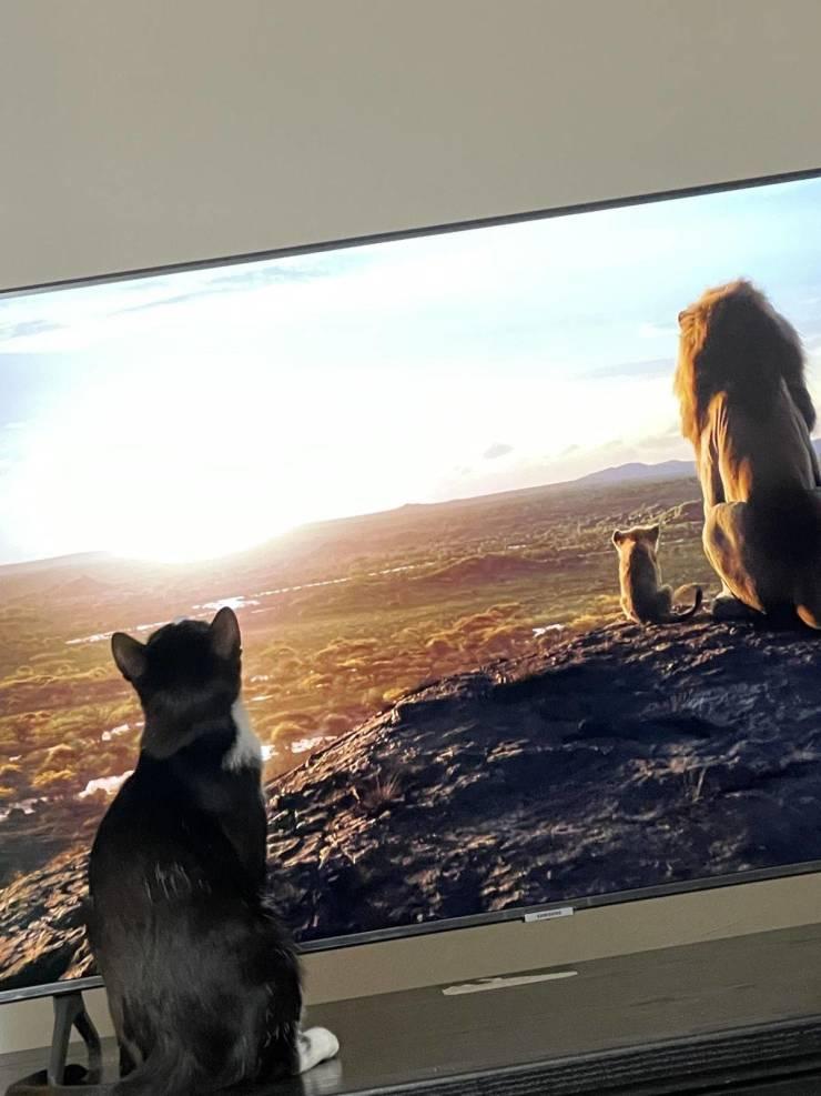 leijonakuninkaat.jpg