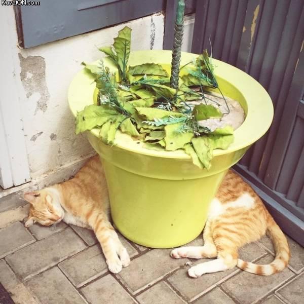 longcat_.jpg