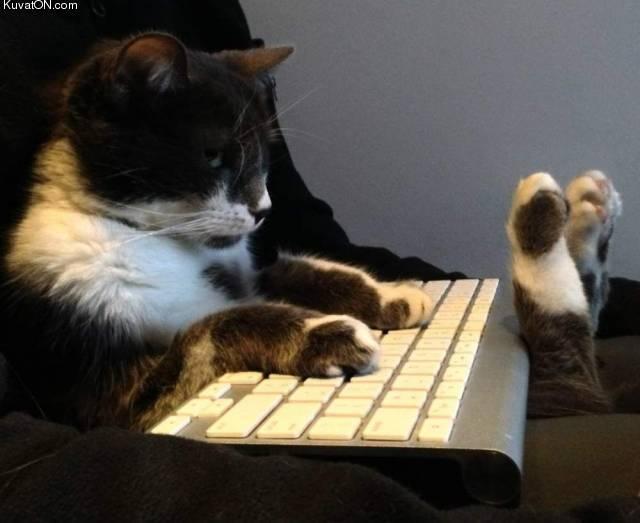 nerdcat.jpg