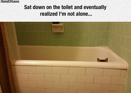 never_alone_when_you_have_a_cat.jpg