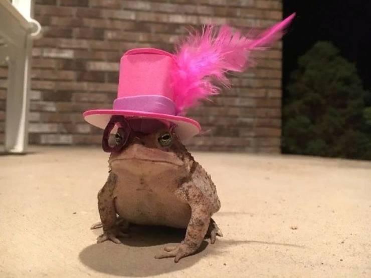 nice_hat_frog.jpg