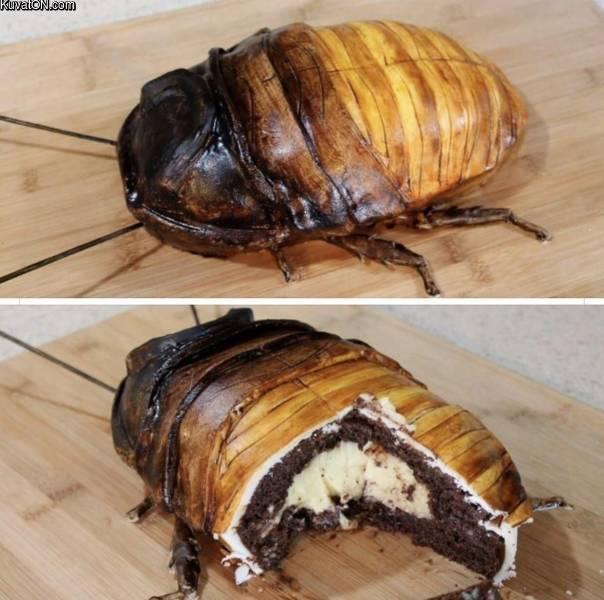 omnnss_hyvaa_kakkua.jpg
