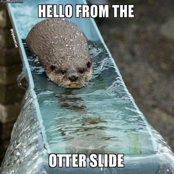 otter_slide.jpg