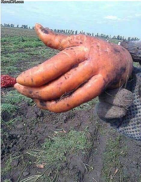 porkkanahandy.jpg