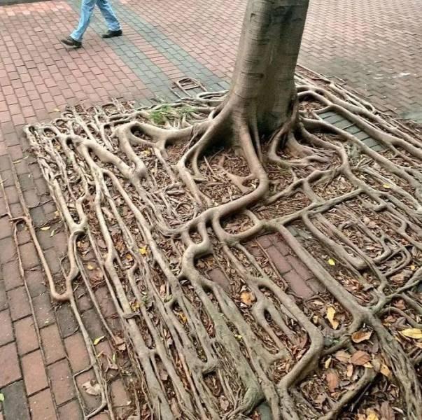 puunjuuret_ne_ovat_taalla.jpg