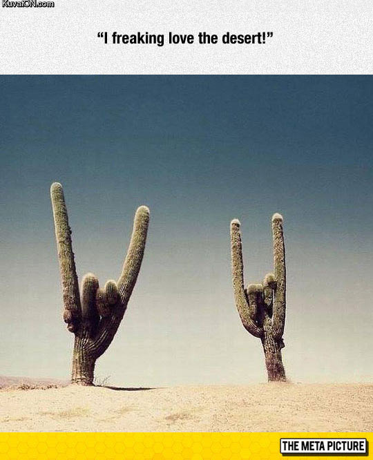 rock_rock.jpg