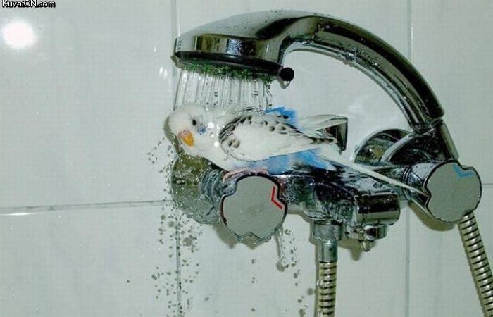 shower_time.jpg