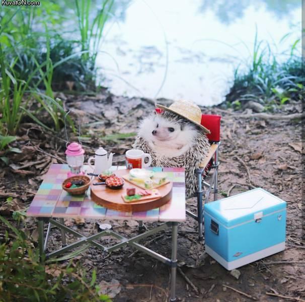 siilin_piknik.jpg