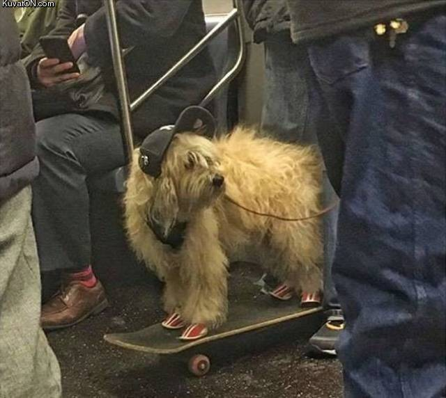 skaterdog.jpg