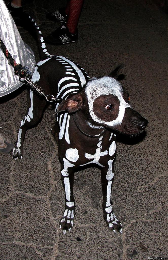 funny pictures Skeleton_dog